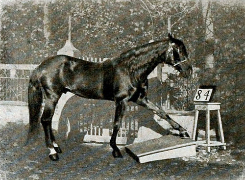 Clever Hans – The Horse who could do Arithmetic