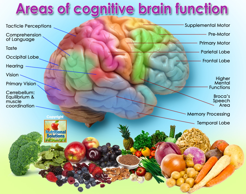 Strategies to Improve Cognitive Function - My Expedition ...